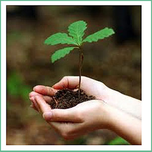 importance of saving environment essay Short essay on environment category: environment, essays, paragraphs and articles on august 7, 2015 by team work environment  the importance of saving water.