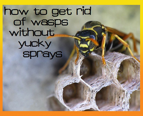 how to kill wasps in my summer car